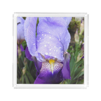 German Iris With Some Raindrops Acrylic Tray