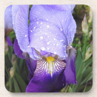 German Iris With Some Raindrops Coaster