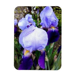 German Irises And Some Raindrops Magnet