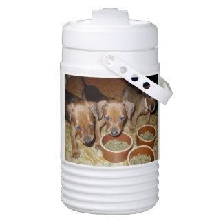 german Pinscher_puppies Drinks Cooler