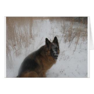 German Shephed Dog In Snowstorm Card