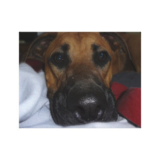 German Shepherd/ Boxer Mix closeup Canvas Print