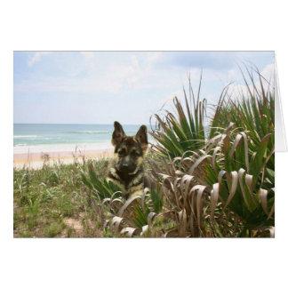 German Shepherd Card Beachgrass