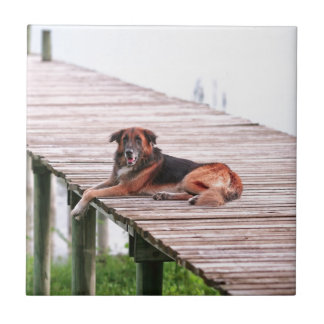 German shepherd cross dog lying on jetty ceramic tile