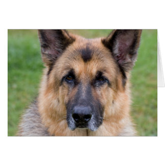 German Shepherd dog beautiful blank note card