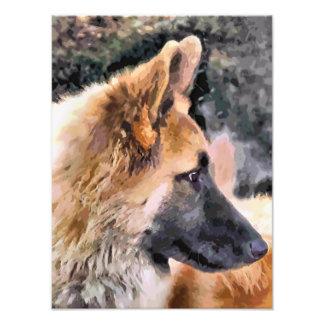 GERMAN SHEPHERD DOG PHOTO PRINT