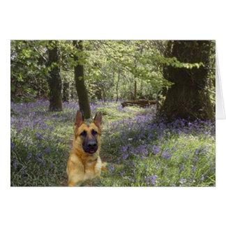 German Shepherd Forest Card