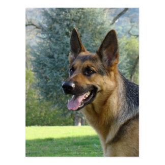 German Shepherd POST CARDS POST CARD