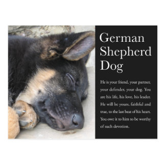German Shepherd Postcard