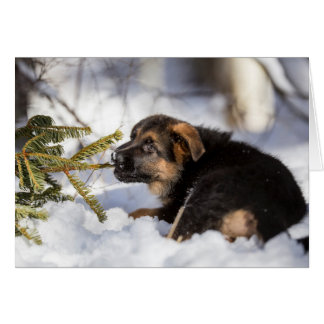 German shepherd pulling pine tree branch card