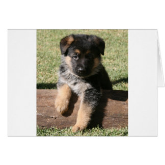 "German Shepherd Puppy ""Big Max"" Greeting Card"