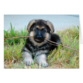 German Shepherd Puppy Card