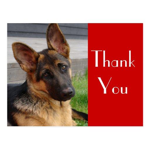 German Shepherd Puppy Dog Thank You  Post Card