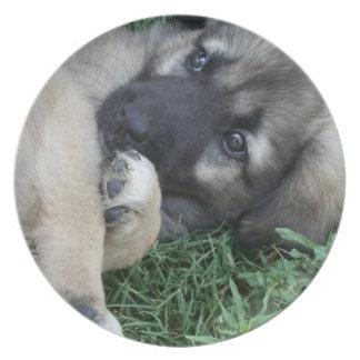 German Shepherd Puppy  Plate