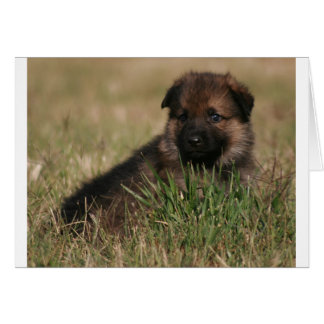 "German Shepherd Puppy ""The Lookout"" Greeting Card"