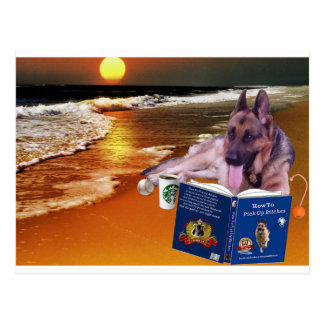 German Shepherd Reading Book Postcard