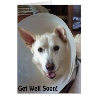 German Shepherd Rescue Central Texas Get Well Card