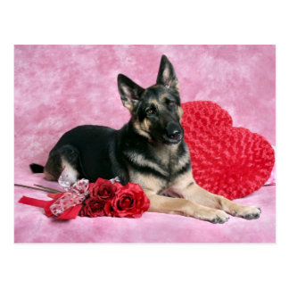 German Shepherd Valentine Postcard