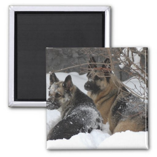 German Shepherds Best Friends Fridge Magnets