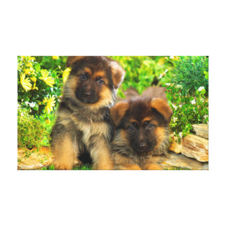 German Shepherds Canvas Print