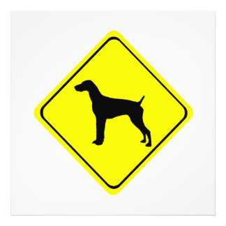 German short-Haired Pointer Dog Crossing Sign Photographic Print