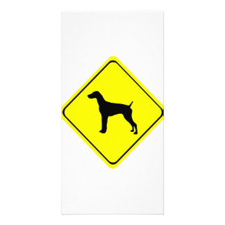 German short-Haired Pointer Dog Crossing Sign Picture Card