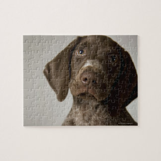 German Short-Haired Pointer puppy Puzzle
