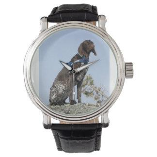 german shorthair pointer sitting wristwatch