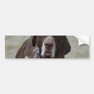 German Shorthaired Pointer Dog Bumper Sticker