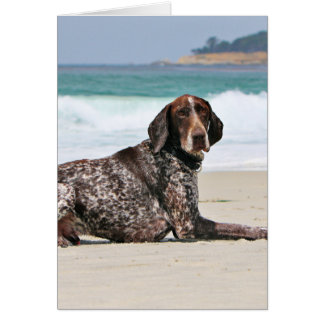 German Shorthaired Pointer - Luke - Riley Card