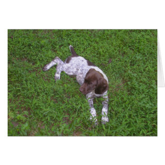 German Shorthaired Pointer Puppy in the Grass Card