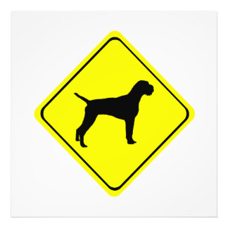 German Wired-Haired Pointer Dog Crossing Sign Photograph