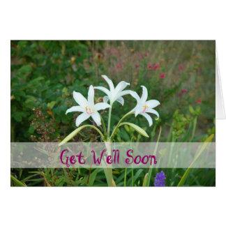 Get Well-Crinum Lily Card