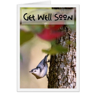 Get Well - Nuthatch Greeting Card