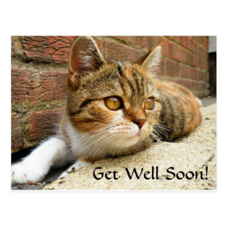 Get well soon Cat Card Postcard