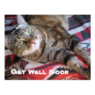Get Well Soon Cat Postcard