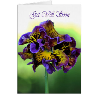 Get Well Soon -  Frilly Daisy Flower Greeting Cards