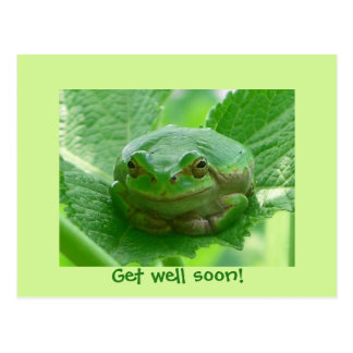 Get well soon - green frog with smile postcard