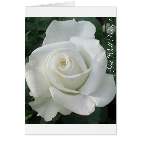 Get Well Soon, I care !Lovely White Rose Card
