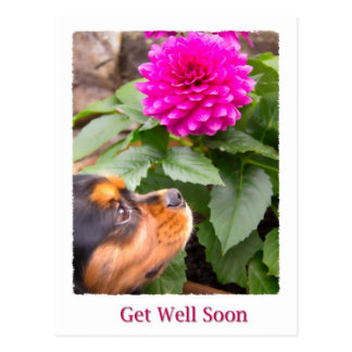 Get Well Soon King Charles Spaniel And Dahlia Postcard