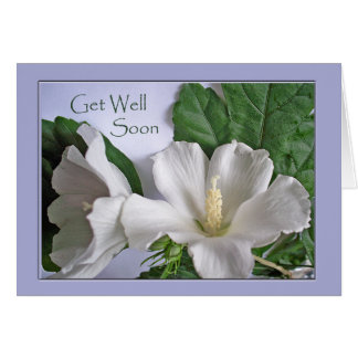 Get Well Soon, White Hibiscus, Rose of Sharon Greeting Card