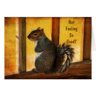 Get Well - Squirrel Greeting Card