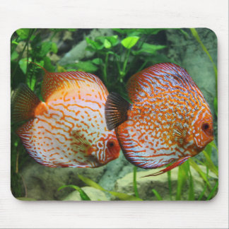 "Get your ""Discus On"" Mouse Pad"