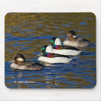 Getting My Ducks in a Row: Four Buffleheads Mouse Pad