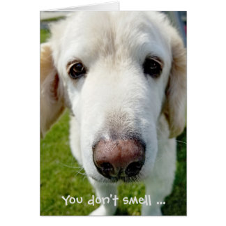 getting old birthday humor-dog nose card