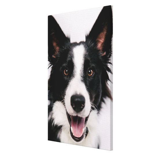 Getty Images | A Smiling Border Collie Canvas Print