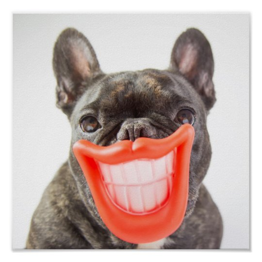 Getty Images | A Smiling Dog Poster