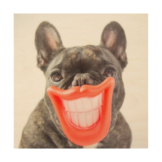 Getty Images   A Smiling Dog Wood Print