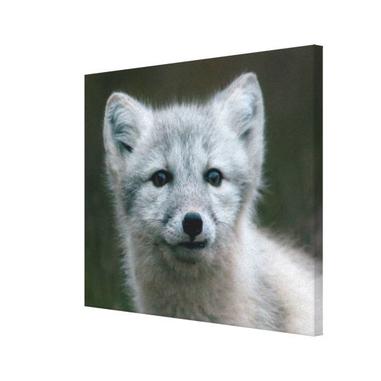 Getty Images | Arctic Fox Kit Canvas Print