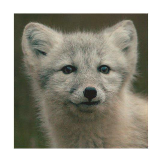 Getty Images   Arctic Fox Kit Wood Print